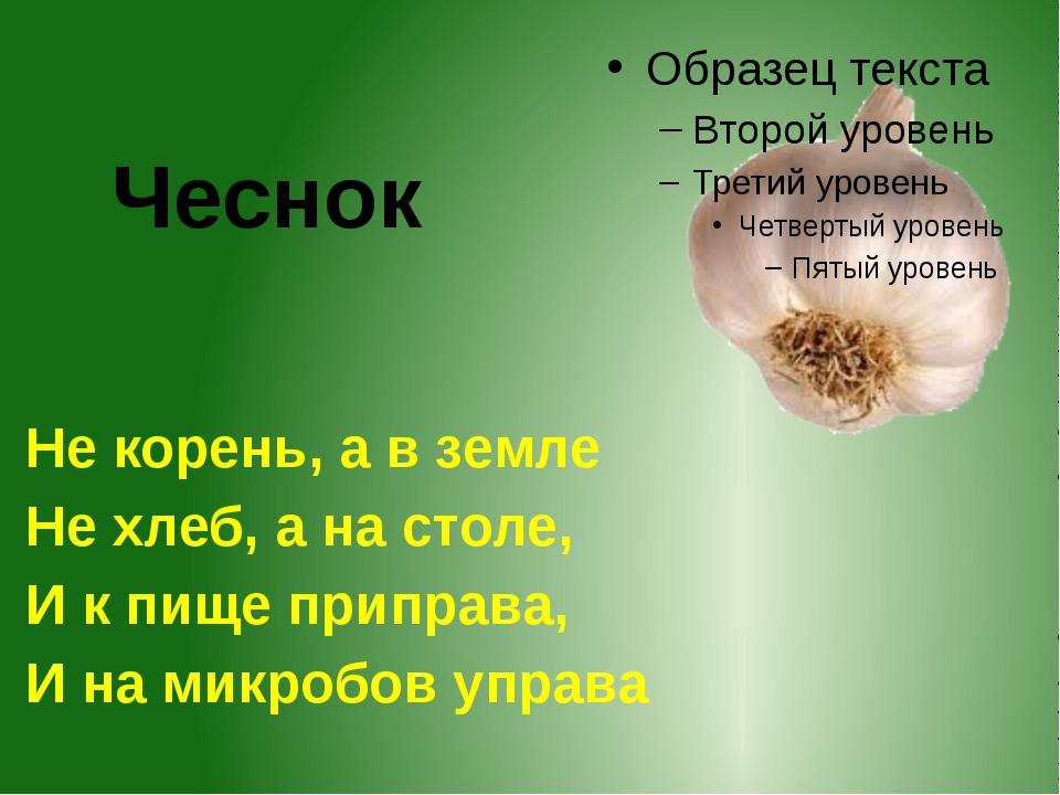 Чеснок Не корень, а в земле Не хлеб, а на столе, И к пище приправа, И на микр...