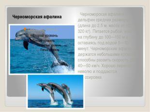 Черноморская афалина Черноморская афалина — дельфин средних размеров (длина д