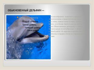 ОБЫКНОВЕННЫЙ ДЕЛЬФИН — это китообразное животное с крепким телосложением и пр