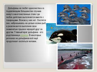 Дельфины не любят одиночества и в подавляющем большинстве случаев живут в
