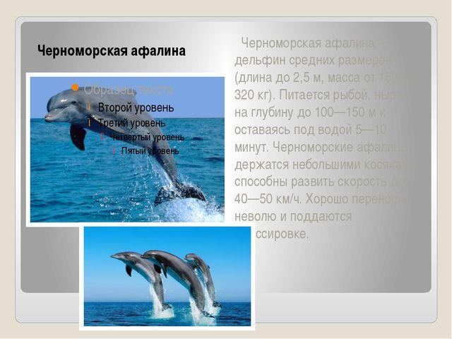 Черноморская афалина Черноморская афалина — дельфин средних размеров (длина д...