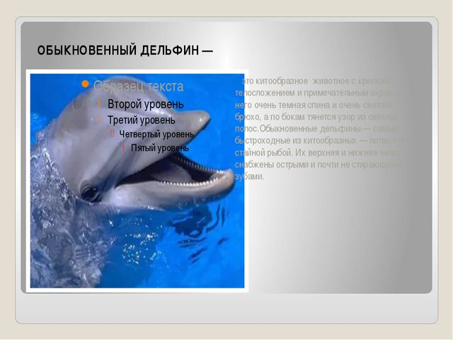 ОБЫКНОВЕННЫЙ ДЕЛЬФИН — это китообразное животное с крепким телосложением и пр...