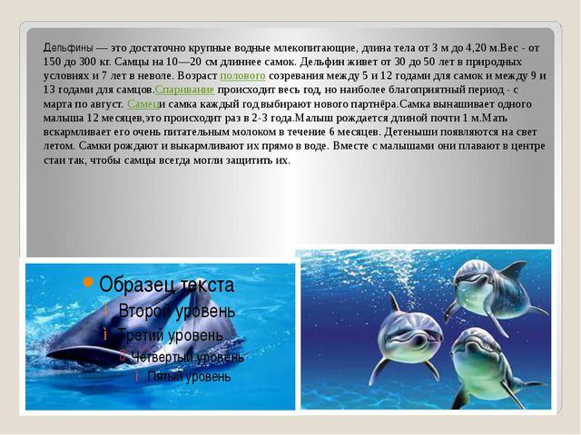 Дельфины — это достаточно крупные водные млекопитающие, длина тела от 3 м до...