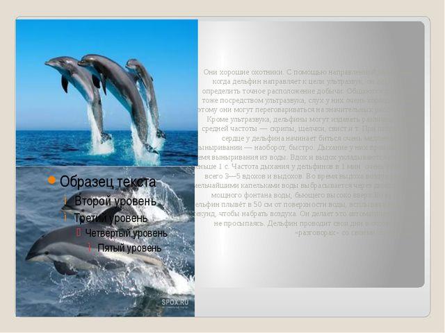 Они хорошие охотники. С помощью направленной эхолокации, когда дельфин напра...