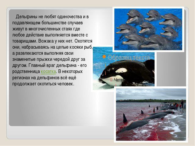 Дельфины не любят одиночества и в подавляющем большинстве случаев живут в...