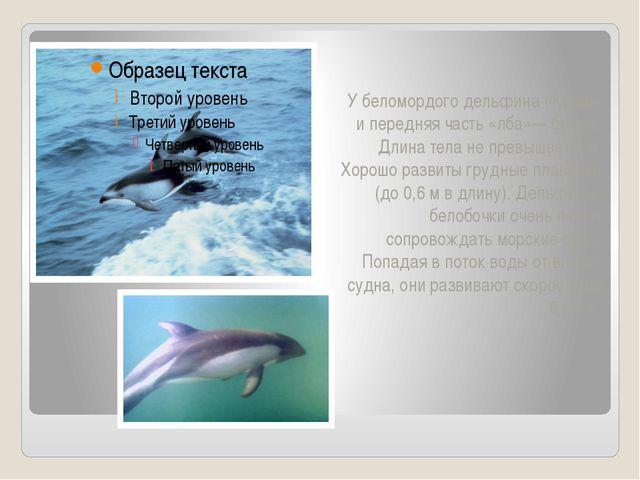 У беломордого дельфина «Клюв» и передняя часть «лба»— белые. Длина тела не пр...