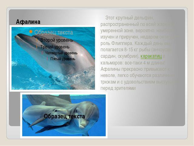 Афалина Этот крупный дельфин, распространенный по всей жаркой и умеренной зон...