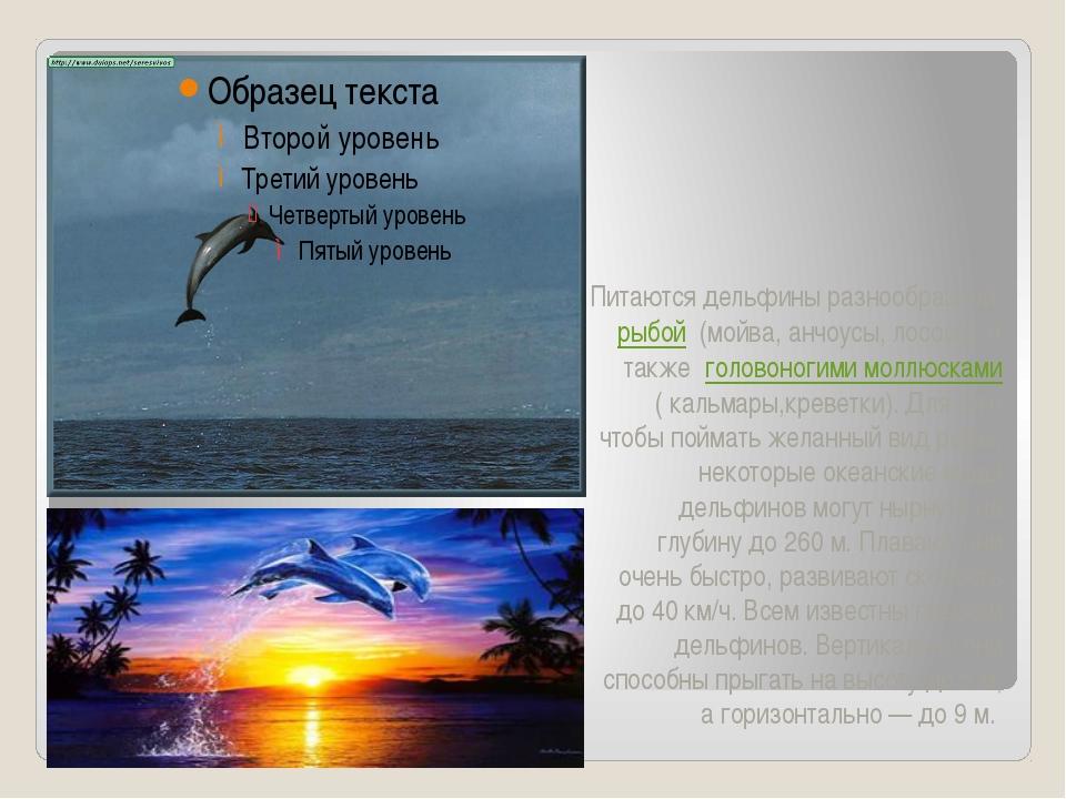Питаются дельфины разнообразнойрыбой (мойва, анчоусы, лосось), а такжегол...