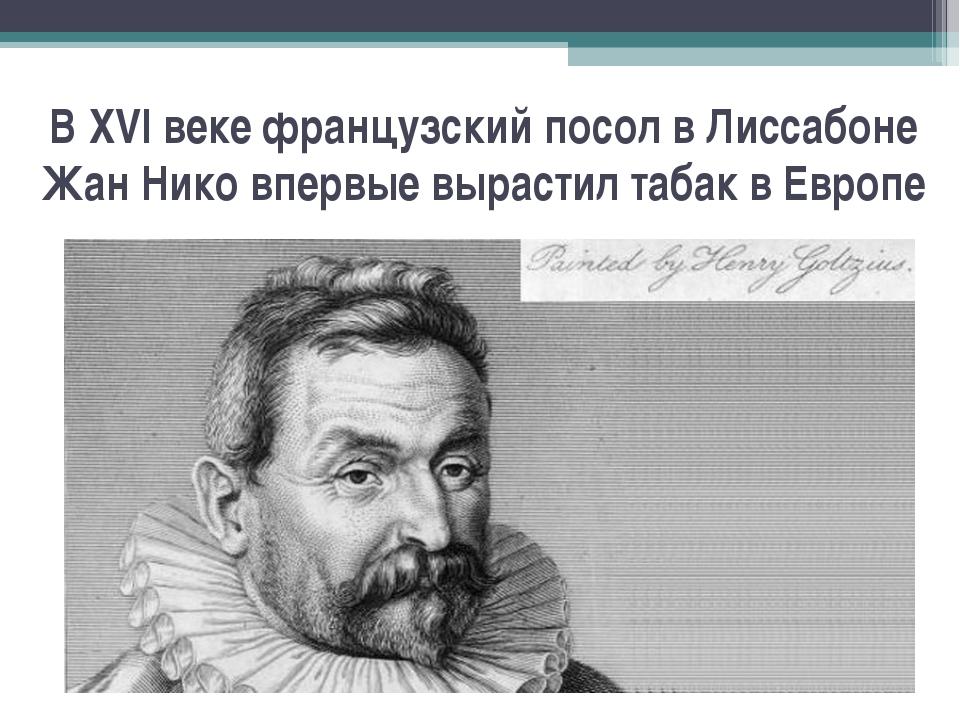 В XVI веке французский посол в Лиссабоне Жан Нико впервые вырастил табак в Ев...