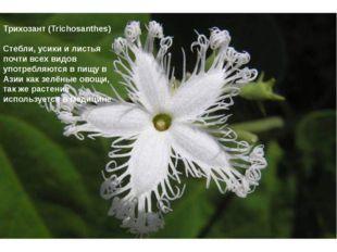 Трихозант (Trichosanthes) Стебли, усики и листья почти всех видов употребляю