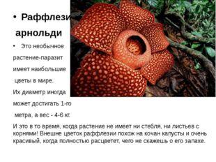 Раффлезия арнольди Это необычное растение-паразит имеет наибольшие цветы в м