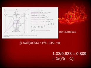 рост человека а. 1,03/0,833 = 0,809 = 1/(√5 -1) (1,03∶2)/0,833 = (√5 -1)/2 =φ