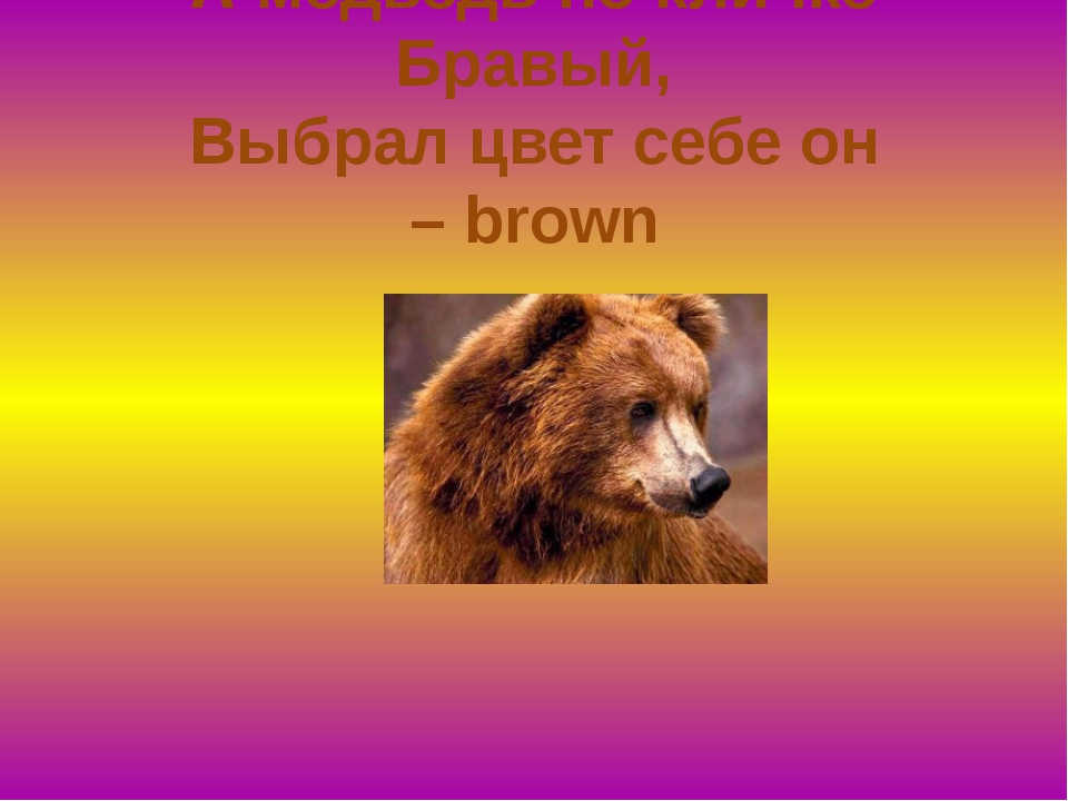 А медведь по кличке Бравый, Выбрал цвет себе он –brown