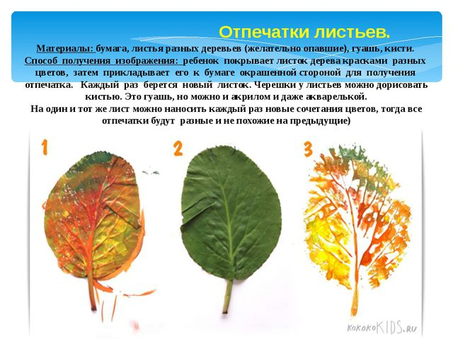 Отпечатки листьев. Материалы: бумага, листья разных деревьев (желательно опа...