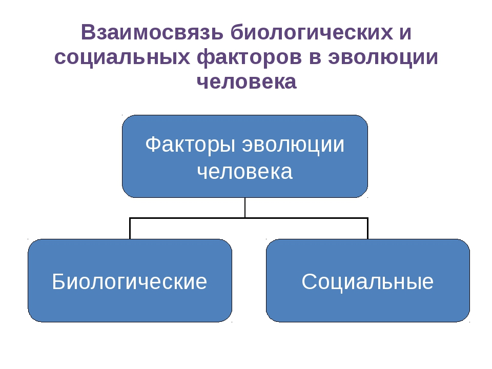Взаимосвязь биологических и социальных факторов в эволюции человека Факторы э...