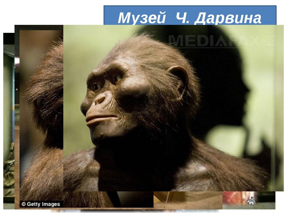 Музей Ч. Дарвина