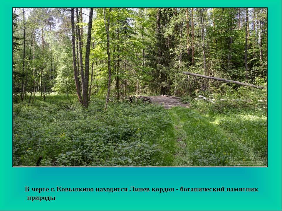 В черте г. Ковылкино находится Линев кордон - ботанический памятник природы