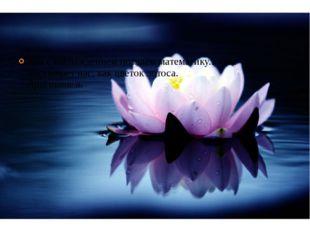 Мы с наслаждением познаём математику... Она восхищает нас, как цветок лотоса.