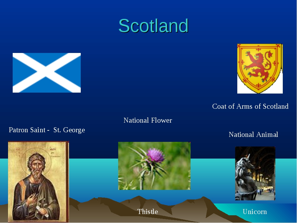 Scotland National Flower National Animal Patron Saint - St. George Thistle Un...