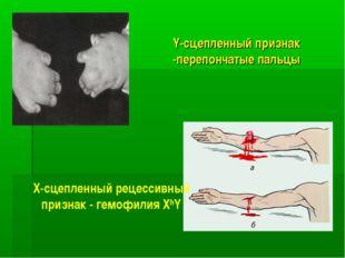 Y-сцепленный признак -перепончатые пальцы Х-сцепленный рецессивный признак -