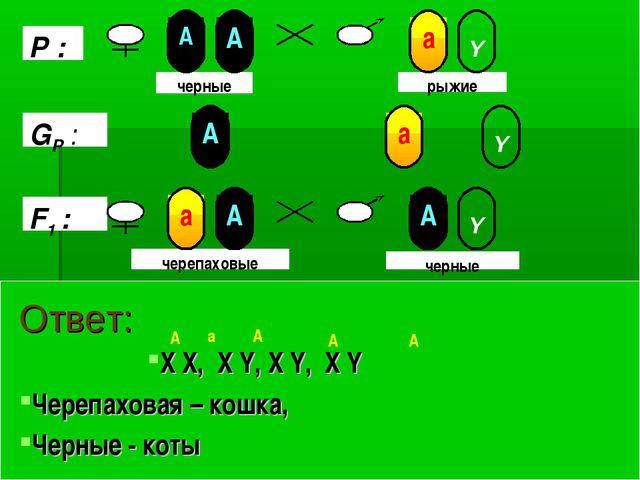 Ответ: X X, X Y, X Y, X Y Черепаховая – кошка, Черные - коты А А А А а