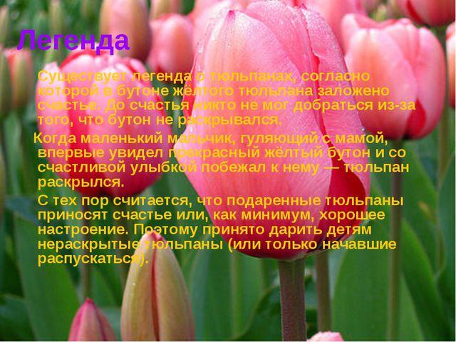 Легенда Существует легенда о тюльпанах, согласно которой в бутоне жёлтого тюл...