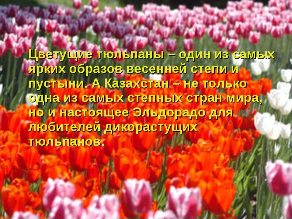 Цветущие тюльпаны – один из самых ярких образов весенней степи и пустыни. А...