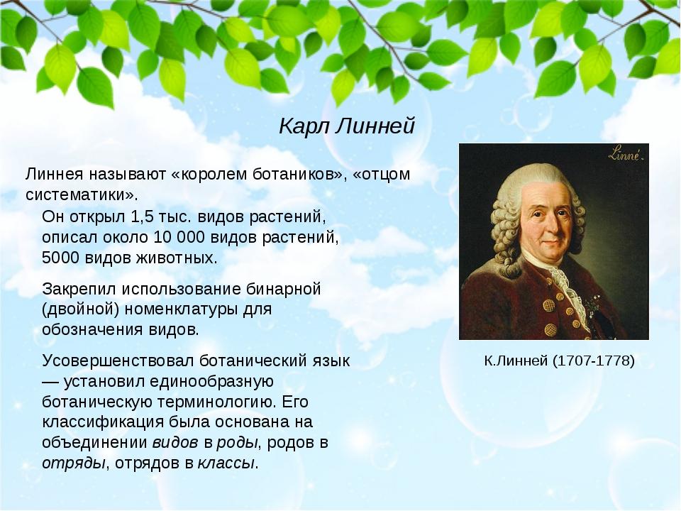 Линнея называют «королем ботаников», «отцом систематики». Он открыл 1,5 тыс....