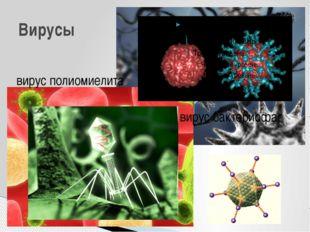 вирус полиомиелита Вирусы вирус бактериофаг Интересно, что икосаэдр оказался