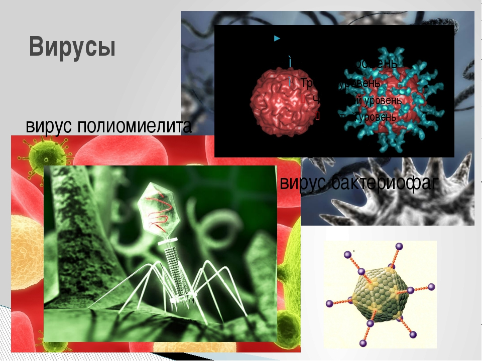 вирус полиомиелита Вирусы вирус бактериофаг Интересно, что икосаэдр оказался...