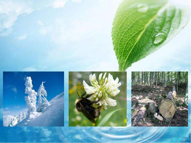 Абиотические факторы (неживой природы) Температура Влажность Свет Давление О...