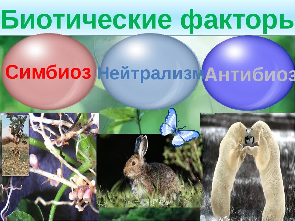 Комменсализм Один из организмов извлекает из взаимоотношения пользу, для дру...