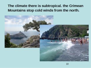 The climate there is subtropical. the Crimean Mountains stop cold winds from