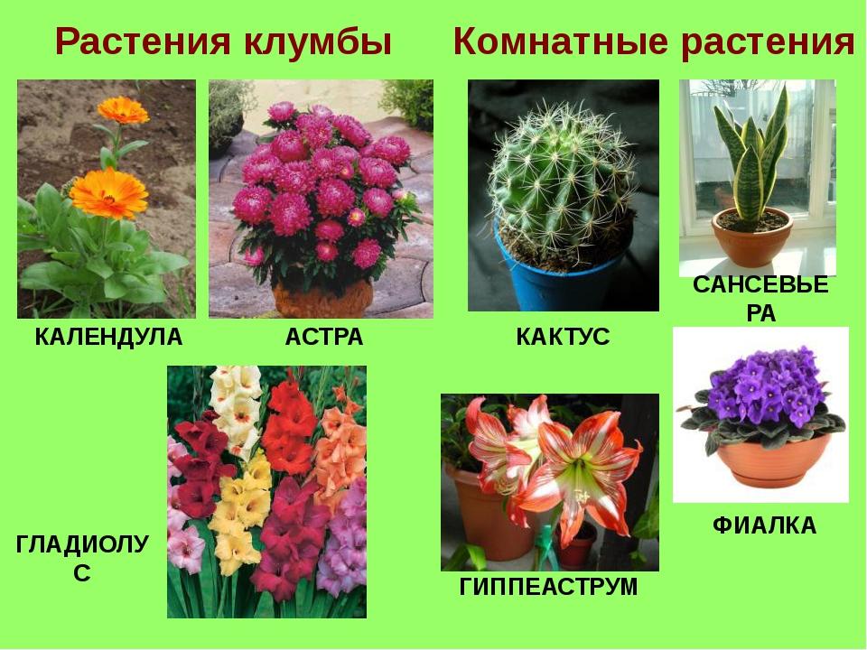 Картинки растений с именами