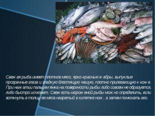 Свежая рыба имеет плотное мясо, ярко-красные жабры, выпуклые прозрачные гла