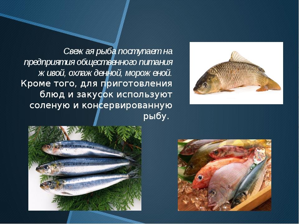 Свежая рыба поступает на предприятия общественного питания живой, охлажденной...