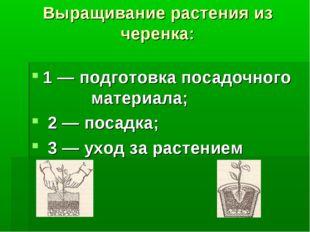 Выращивание растения из черенка: 1 — подготовка посадочного материала; 2 — по