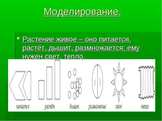 Моделирование. Растение живое – оно питается, растёт, дышит, размножается; ем...