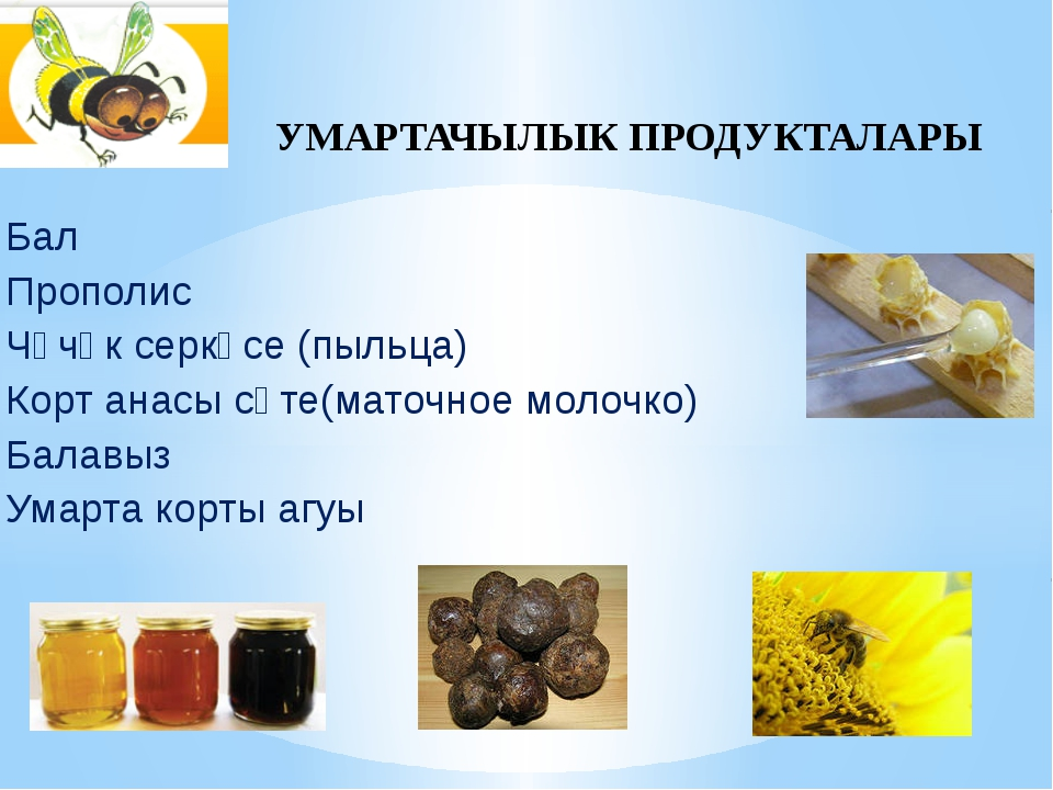Бал Прополис Чәчәк серкәсе (пыльца) Корт анасы сөте(маточное молочко) Балавыз...