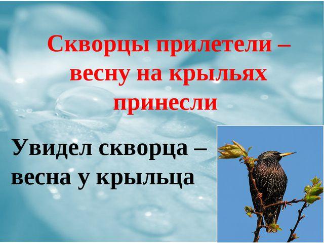Скворцы прилетели – весну на крыльях принесли Увидел скворца – весна у крыльца