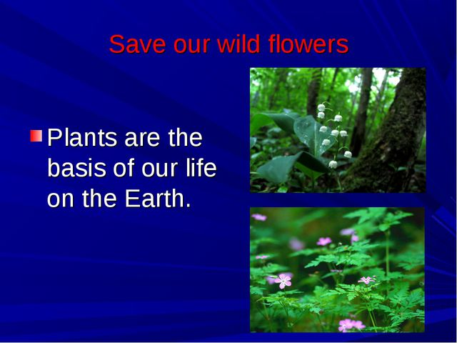 Save our wild flowers Plants are the basis of our life on the Earth.