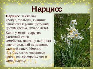 Нарцисс, также как крокус,тюльпан, гиацинт относится к раннецветущим цветам