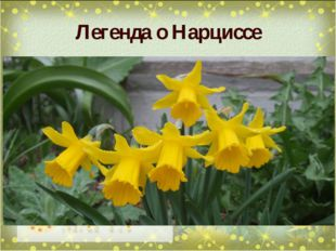 Легенда о Нарциссе Наязыке цветовнарцисс означает обманчивые надежды,желан