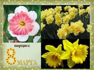Отгадай загадку Мой цветок - как блюдце, В середине - чашечка, Чтобы пить мог
