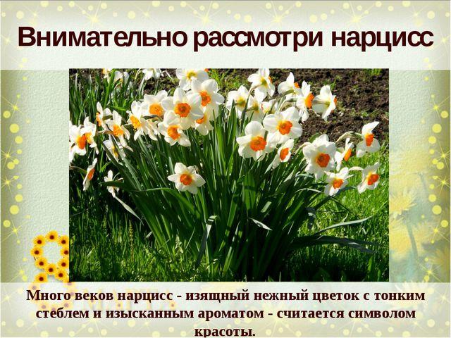 Внимательно рассмотри нарцисс Много веков нарцисс - изящный нежный цветок с т...