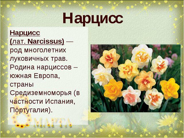Нарцисс Нарцисс (лат.Narcissus)— род многолетних луковичных трав. Родина на...
