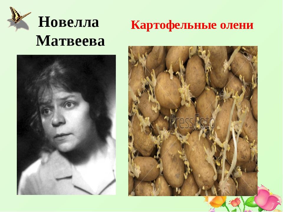 Новелла Матвеева Картофельные олени