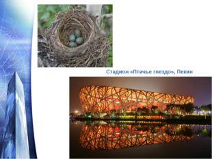 Стадион «Птичье гнездо», Пекин