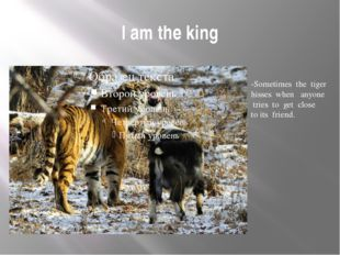 I am the king -Sometimes the tiger hisses when anyone tries to get close to i