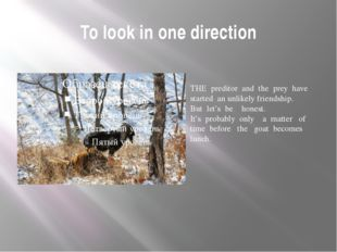 To look in one direction THE preditor and the prey have started an unlikely f